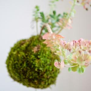 workshop-kokedama-fiorito-tropicale