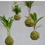 workshop-kokedama-con-pianta-ricadente