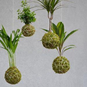 workshop-kokedama-verdi-fioreria-cuccagna-milano-eventi-giapponesi