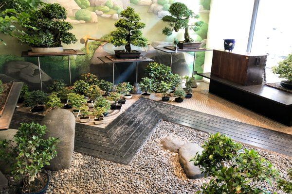 crespi-bonsai-milano-negozio-web