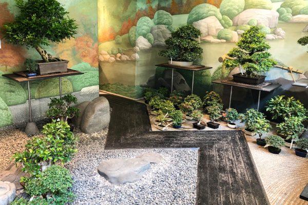 crespi-bonsai-milano-web
