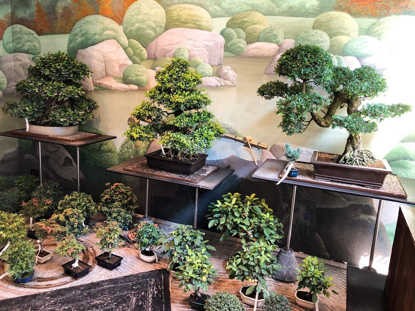 dove-comprare-bonsai-milano-web