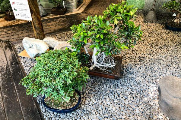 giardino-giapponese-crespi-bonsai-milano