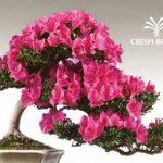 satsuki-bonsai-festival-crespi-parabiago-milano